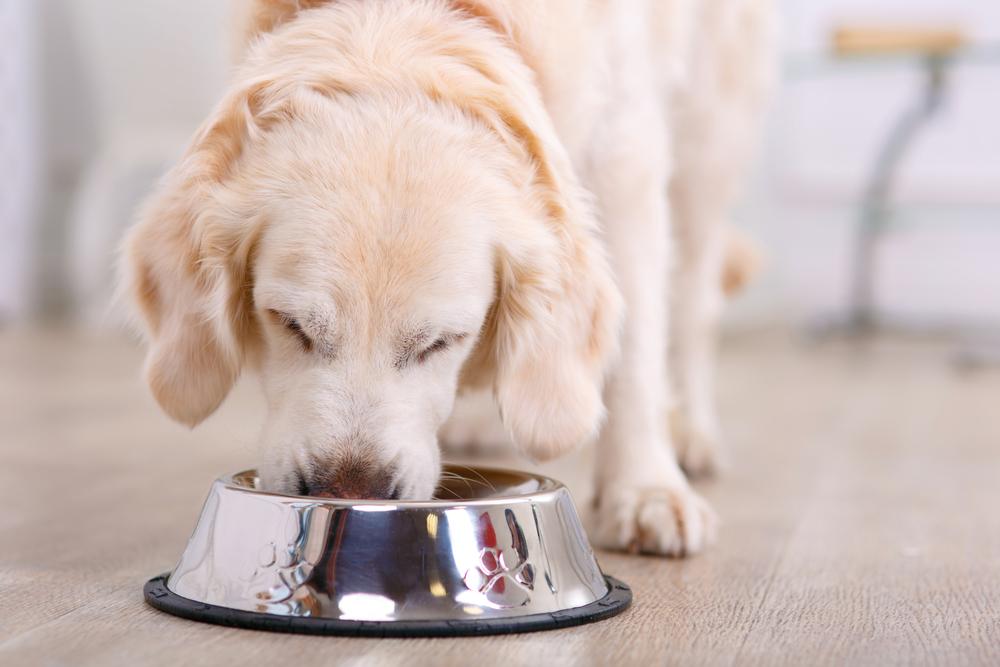 nourrir-son-chien